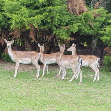 Duthut Villa Alpa tussen de wol Herten